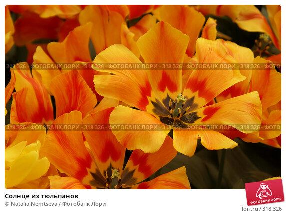 Купить «Солнце из тюльпанов», эксклюзивное фото № 318326, снято 8 апреля 2008 г. (c) Natalia Nemtseva / Фотобанк Лори