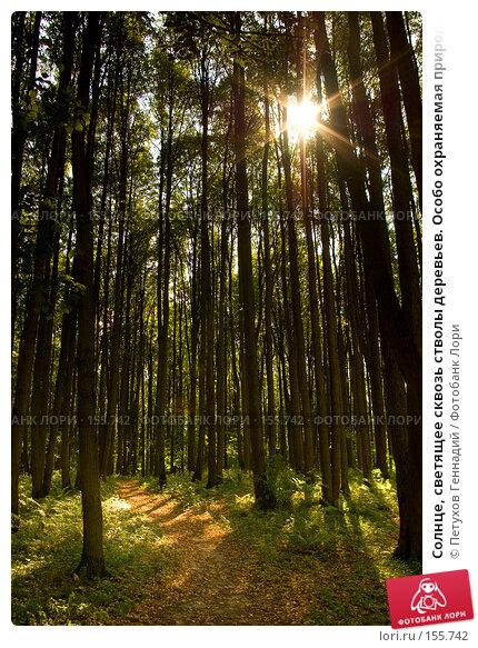 """Солнце, светящее сквозь стволы деревьев. Особо охраняемая природная территория """"Битцевский лес"""", фото № 155742, снято 4 сентября 2007 г. (c) Петухов Геннадий / Фотобанк Лори"""