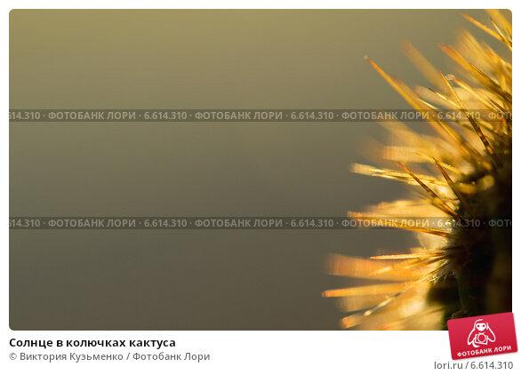 Солнце в колючках кактуса. Стоковое фото, фотограф Виктория Кузьменко / Фотобанк Лори