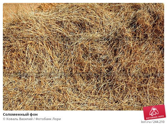 Соломенный фон, фото № 244210, снято 25 сентября 2007 г. (c) Коваль Василий / Фотобанк Лори