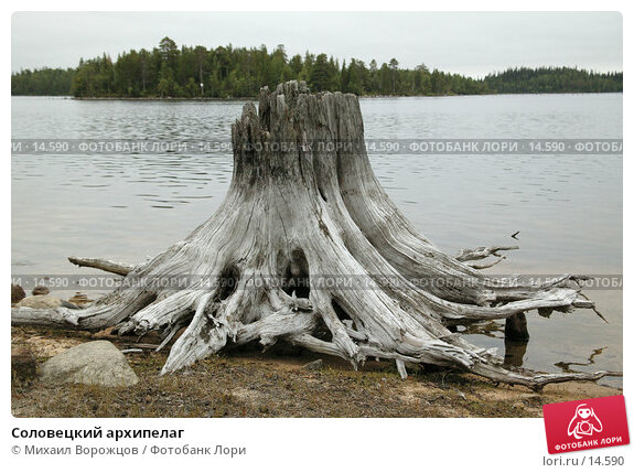 Соловецкий архипелаг , фото № 14590, снято 17 августа 2007 г. (c) Михаил Ворожцов / Фотобанк Лори