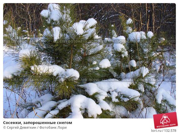 Купить «Сосенки, запорошенные снегом», фото № 132578, снято 25 ноября 2007 г. (c) Сергей Девяткин / Фотобанк Лори
