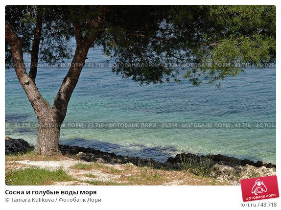 Сосна и голубые воды моря, фото № 43718, снято 7 апреля 2007 г. (c) Tamara Kulikova / Фотобанк Лори