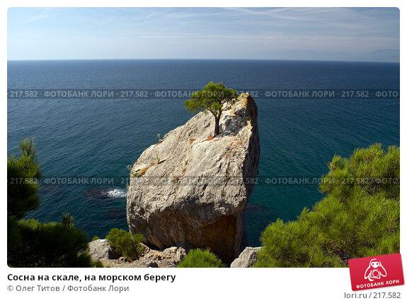 Сосна на скале, на морском берегу, фото № 217582, снято 19 сентября 2006 г. (c) Олег Титов / Фотобанк Лори
