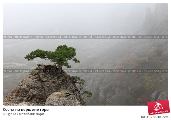 Купить «Сосна на вершине горы», фото № 33409594, снято 23 октября 2018 г. (c) EgleKa / Фотобанк Лори