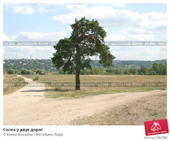 Сосна у двух дорог, фото № 54594, снято 21 июня 2007 г. (c) Елена Блохина / Фотобанк Лори
