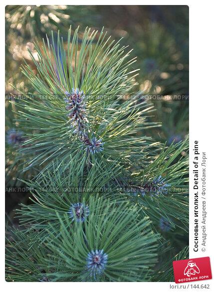 Сосновые иголки. Detail of a pine, фото № 144642, снято 16 сентября 2006 г. (c) Андрей Андреев / Фотобанк Лори