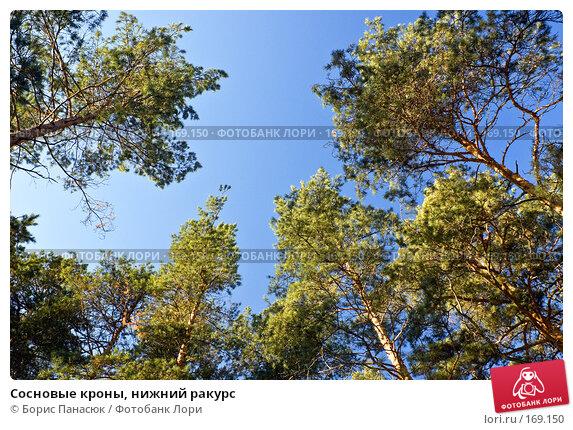Купить «Сосновые кроны, нижний ракурс», фото № 169150, снято 31 декабря 2007 г. (c) Борис Панасюк / Фотобанк Лори