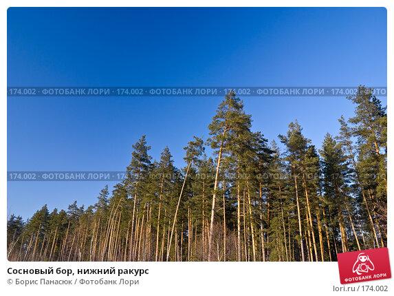 Сосновый бор, нижний ракурс, фото № 174002, снято 31 декабря 2007 г. (c) Борис Панасюк / Фотобанк Лори