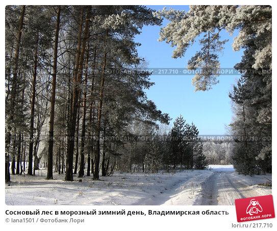 Купить «Сосновый лес в морозный зимний день, Владимирская область», эксклюзивное фото № 217710, снято 7 января 2008 г. (c) lana1501 / Фотобанк Лори
