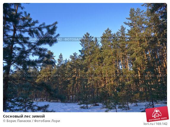 Сосновый лес зимой, фото № 169142, снято 31 декабря 2007 г. (c) Борис Панасюк / Фотобанк Лори