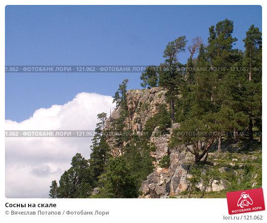 Купить «Сосны на скале», фото № 121062, снято 5 августа 2007 г. (c) Вячеслав Потапов / Фотобанк Лори