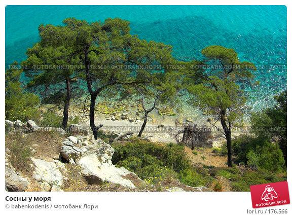 Сосны у моря, фото № 176566, снято 8 мая 2006 г. (c) Бабенко Денис Юрьевич / Фотобанк Лори