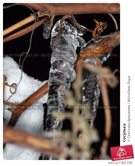 Сосулька, фото № 263150, снято 27 ноября 2007 г. (c) Светлана Арешкина / Фотобанк Лори