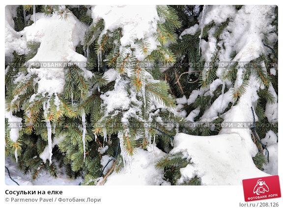 Купить «Сосульки на елке», фото № 208126, снято 19 февраля 2008 г. (c) Parmenov Pavel / Фотобанк Лори