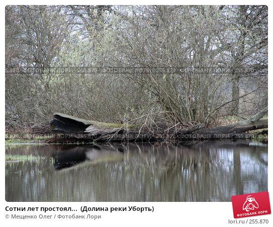 Сотни лет простоял...  (Долина реки Уборть), фото № 255870, снято 9 апреля 2008 г. (c) Мещенко Олег / Фотобанк Лори