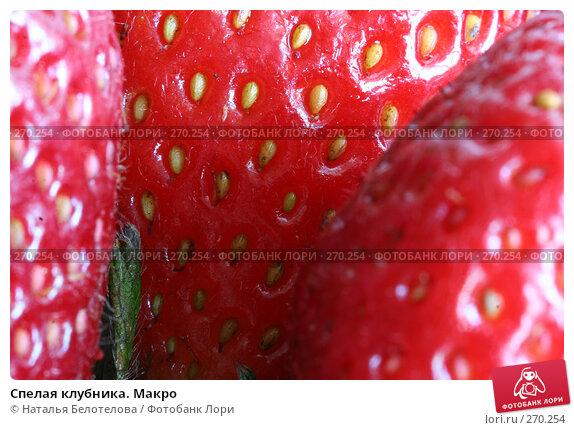 Спелая клубника. Макро, фото № 270254, снято 1 мая 2008 г. (c) Наталья Белотелова / Фотобанк Лори