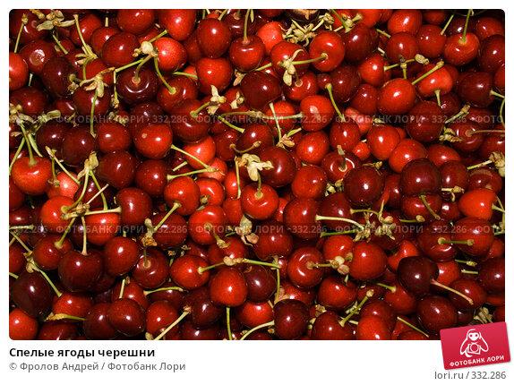 Спелые ягоды черешни, фото № 332286, снято 5 июня 2008 г. (c) Фролов Андрей / Фотобанк Лори