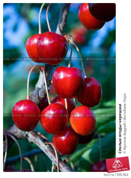 Спелые ягоды черешни, фото № 335922, снято 13 июня 2008 г. (c) Фролов Андрей / Фотобанк Лори
