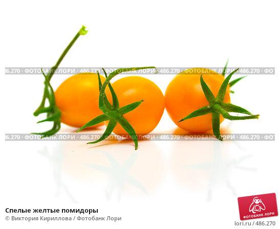 Купить «Спелые желтые помидоры», фото № 486270, снято 4 сентября 2008 г. (c) Виктория Кириллова / Фотобанк Лори