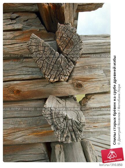 Спилы старых брёвен на срубе древней избы, фото № 310850, снято 22 июля 2017 г. (c) Дмитрий Яковлев / Фотобанк Лори