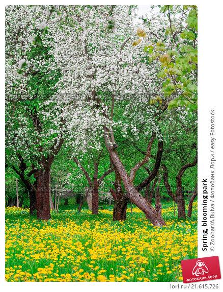 Spring, blooming park. Стоковое фото, фотограф Zoonar/A.Bulva / easy Fotostock / Фотобанк Лори