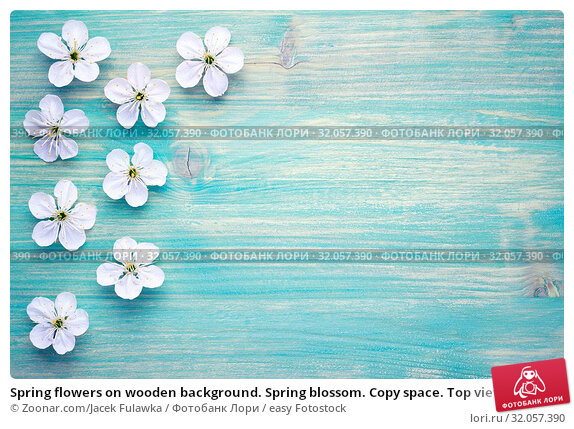Spring flowers on wooden background. Spring blossom. Copy space. Top view. Стоковое фото, фотограф Zoonar.com/Jacek Fulawka / easy Fotostock / Фотобанк Лори