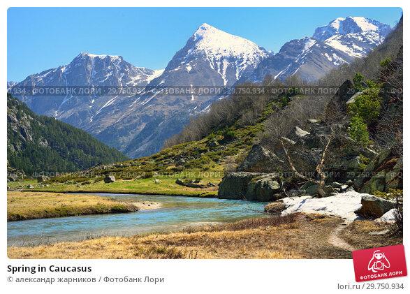 Spring in Caucasus. Стоковое фото, фотограф александр жарников / Фотобанк Лори
