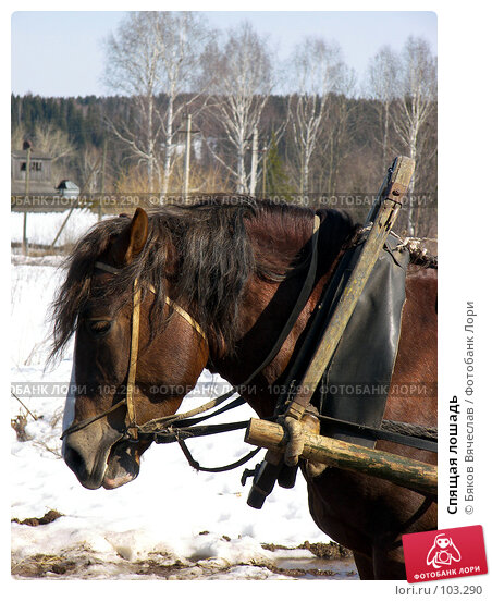 Купить «Спящая лошадь», фото № 103290, снято 18 марта 2018 г. (c) Бяков Вячеслав / Фотобанк Лори