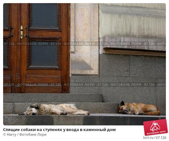 Спящие собаки на ступенях у входа в каменный дом, фото № 67126, снято 20 апреля 2005 г. (c) Harry / Фотобанк Лори