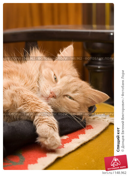 Купить «Спящий кот», фото № 148962, снято 2 декабря 2007 г. (c) Донцов Евгений Викторович / Фотобанк Лори