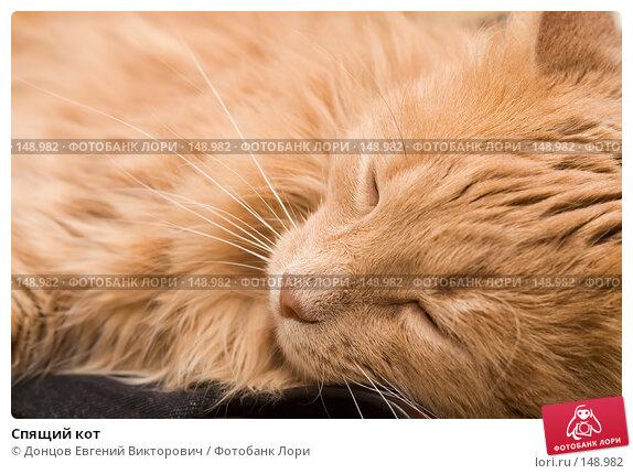 Спящий кот, фото № 148982, снято 2 декабря 2007 г. (c) Донцов Евгений Викторович / Фотобанк Лори