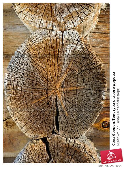 Срез бревен.Текстура старого дерева, фото № 240638, снято 18 января 2017 г. (c) Александр Fanfo / Фотобанк Лори