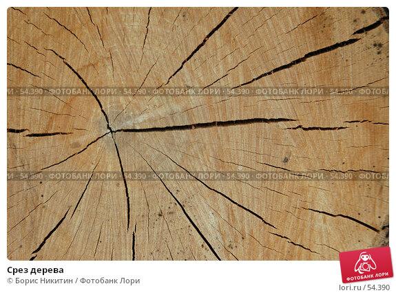 Купить «Срез дерева», фото № 54390, снято 12 августа 2005 г. (c) Борис Никитин / Фотобанк Лори