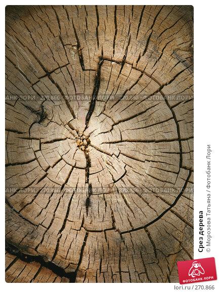 Срез дерева, фото № 270866, снято 24 мая 2007 г. (c) Морозова Татьяна / Фотобанк Лори