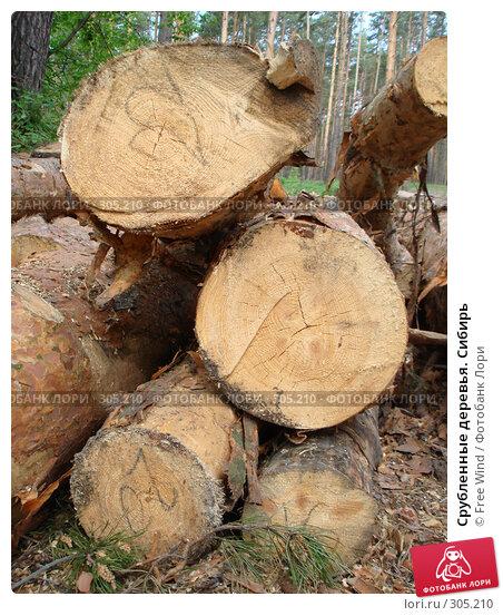 Купить «Срубленные деревья. Сибирь», эксклюзивное фото № 305210, снято 31 августа 2007 г. (c) Free Wind / Фотобанк Лори