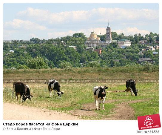 Стадо коров пасется на фоне церкви, фото № 54586, снято 21 июня 2007 г. (c) Елена Блохина / Фотобанк Лори