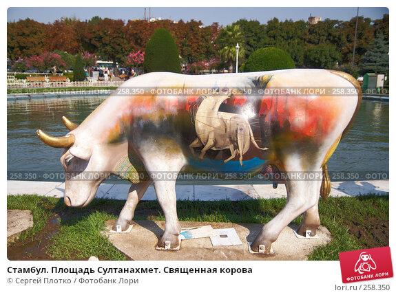 Купить «Стамбул. Площадь Султанахмет. Священная корова», фото № 258350, снято 31 августа 2007 г. (c) Сергей Плотко / Фотобанк Лори