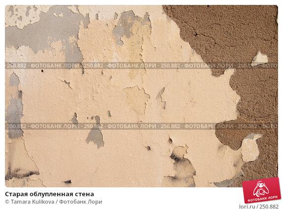 Купить «Старая облупленная стена», фото № 250882, снято 9 апреля 2008 г. (c) Tamara Kulikova / Фотобанк Лори