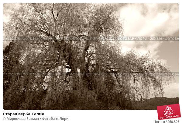 Старая верба.Сепия, фото № 260326, снято 12 апреля 2007 г. (c) Мирослава Безман / Фотобанк Лори