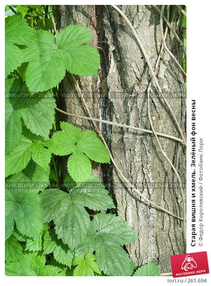 Старая вишня и хмель. Зелёный фон весны, фото № 261694, снято 24 апреля 2008 г. (c) Федор Королевский / Фотобанк Лори