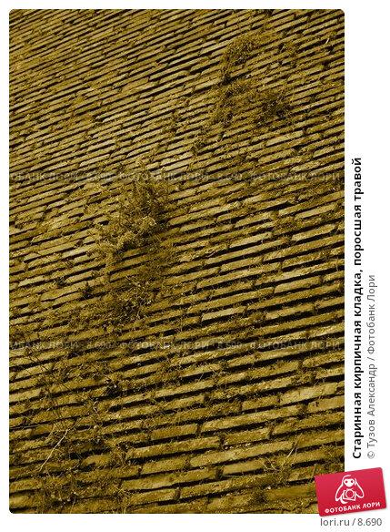 Старинная кирпичная кладка, поросшая травой, фото № 8690, снято 19 августа 2006 г. (c) Тузов Александр / Фотобанк Лори