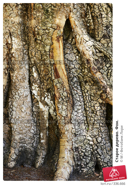 Старое дерево. Фон., фото № 336666, снято 25 января 2017 г. (c) Михаил / Фотобанк Лори