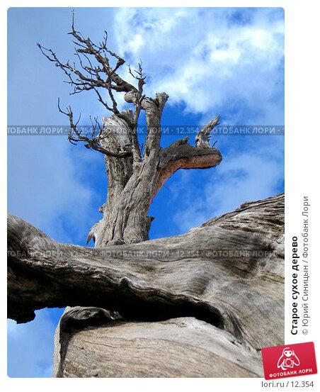 Старое сухое дерево, фото № 12354, снято 29 сентября 2006 г. (c) Юрий Синицын / Фотобанк Лори