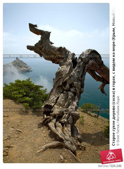 Старое сухое дерево (сосна) в горах, с видом на море (Крым, Новый Свет), фото № 320246, снято 21 мая 2008 г. (c) Олег Титов / Фотобанк Лори