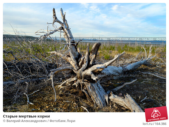 Старые мертвые корни, фото № 164386, снято 29 августа 2007 г. (c) Валерий Александрович / Фотобанк Лори