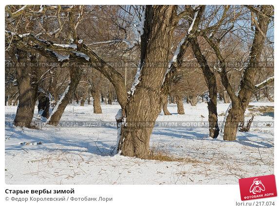 Старые вербы зимой, фото № 217074, снято 16 февраля 2008 г. (c) Федор Королевский / Фотобанк Лори