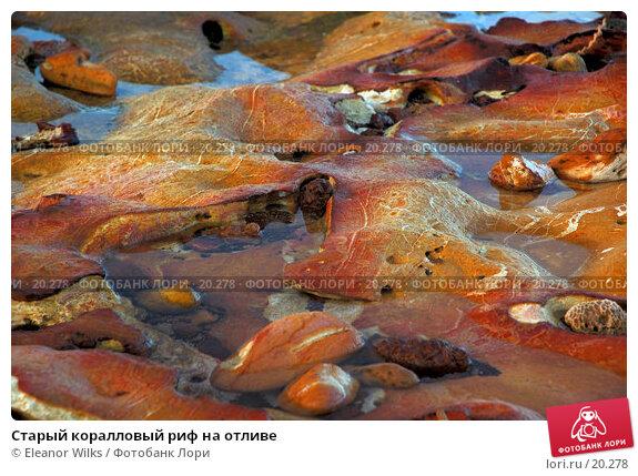 Старый коралловый риф на отливе, фото № 20278, снято 11 марта 2007 г. (c) Eleanor Wilks / Фотобанк Лори