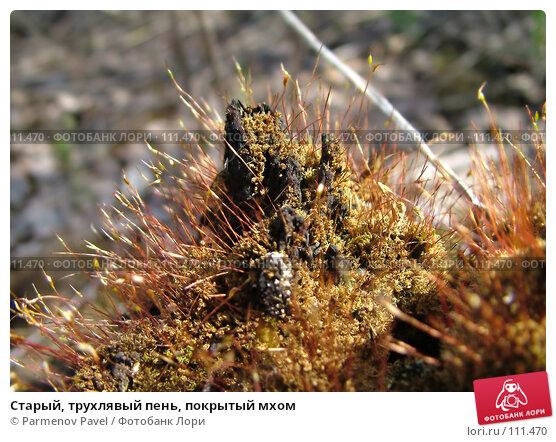 Старый, трухлявый пень, покрытый мхом, фото № 111470, снято 6 мая 2007 г. (c) Parmenov Pavel / Фотобанк Лори