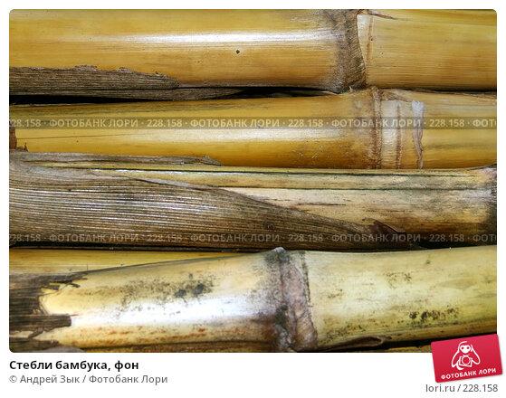 Купить «Стебли бамбука, фон», фото № 228158, снято 22 июня 2007 г. (c) Андрей Зык / Фотобанк Лори